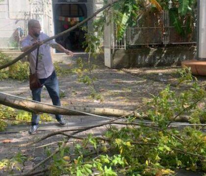 Il Comune di Napoli affronta finalmente il problema degli alberi ed esternalizza la loro manutenzione